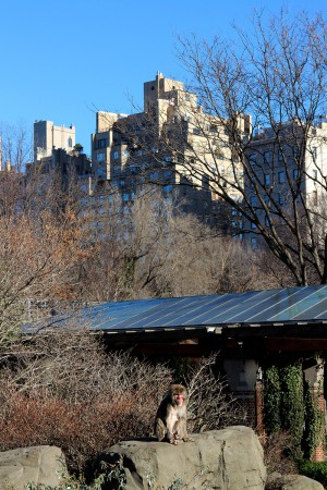 IHEARTALICE.DE – Fashion & Travel-Blog by Alice M. Huynh from Germany: New York / NYC Travel & Food Diary – Leben in New York: Central Park Zoo