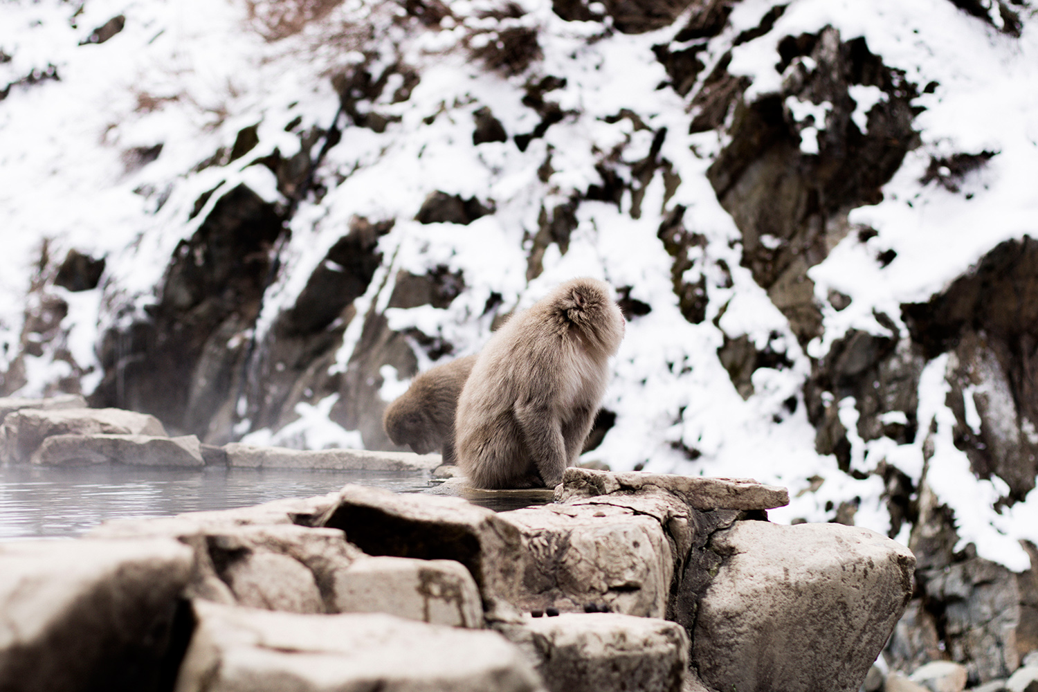 A Quick Travel Guide to Jigokudani Monkey Park 地獄谷野猿公苑 in Nagano, Japan