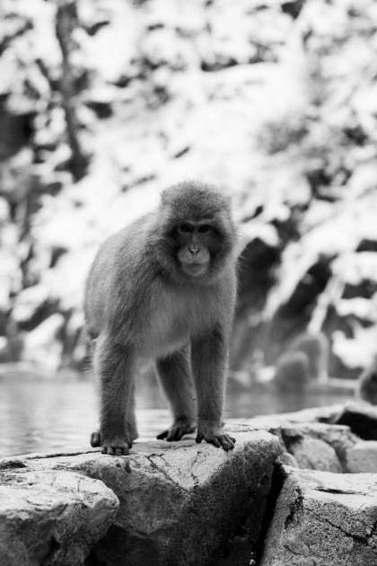 Snow Monkey Park Nagano Travel Guide