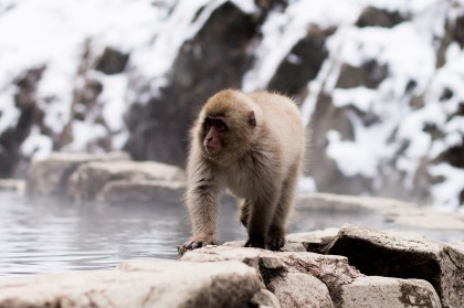 Snow Monkey Park in Nagano, Japan