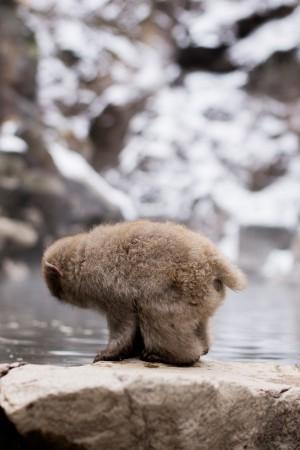 A Quick Travel Guide to Jigokudani Monkey Park 地獄谷野猿公苑 in Nagano, Japan