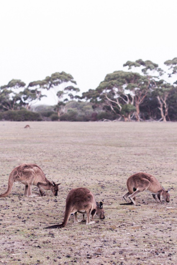 Travel Guide Kangaroo Island, Australia