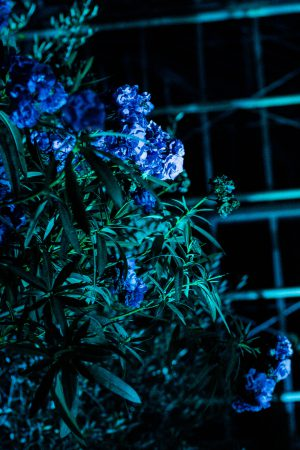 Bombay Sapphire x JUNIQ Secret Art Garden / Berlin Art Week - IheartAlice.com