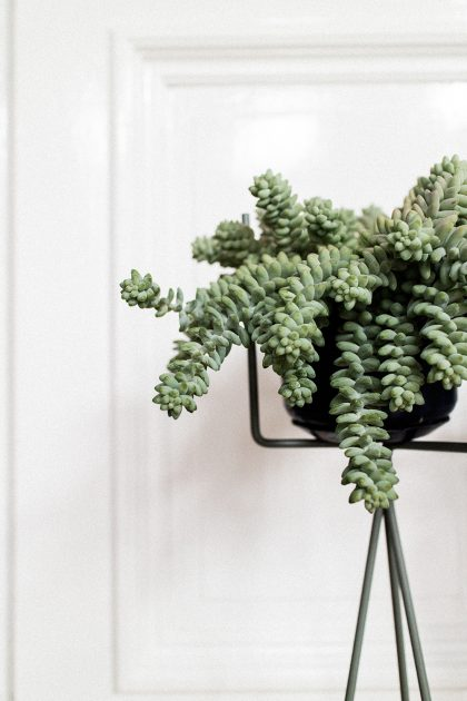 Living Room Inspiration: FERM Living Plantstand from CONNOX / IheartAlice.com