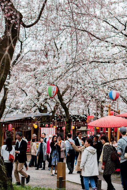 Best Hanami Sakura Spot in Kyoto: Hirano Jinja Shrine / Travel Diary & Guide by iHeartAlice.com - Travel, Food & Lifestyleblog by Alice M. Huynh