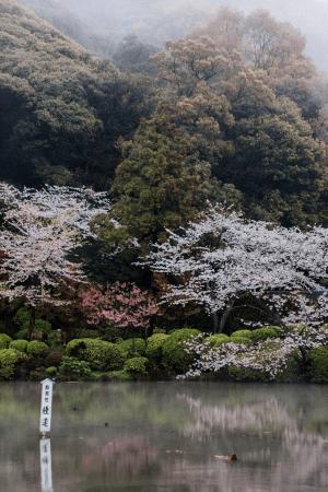 Inbetween The Steam – Jigoku Meguri, Beppu / Beppu Travel Diary: Onsen Japan Phtography - IheartAlice.com