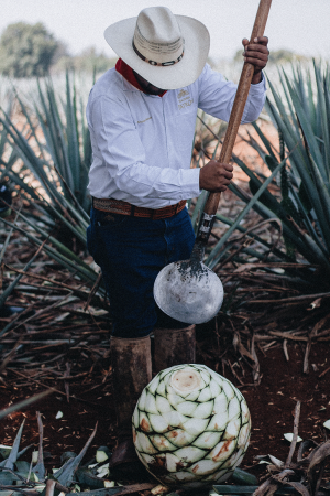 Eine Reise zu den Wurzeln des Tequila mit Patron / Jalisto, Mexico Travel Diary - My trip to Hacienda Patron, the birthplace of Tequila / Travel, Lifestyle & Foodblog by Alice M. Huynh - iHeartAlice.com