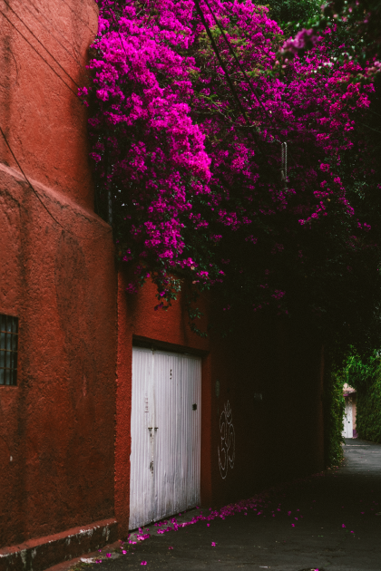 Mexico City Streetlife Photography by Alice M. Huynh / iHeartAlice.com – Travel & Lifestyleblog