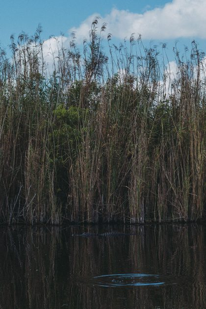 7 Things To Do In Greater Fort Lauderdale / Everglades Eco Travel with Sawgrass Recreation Park & Airboat / Florida Travel Guide by iHeartAlice.com - Travel, Lifestyle & Foodblog by Alice M. Huynh