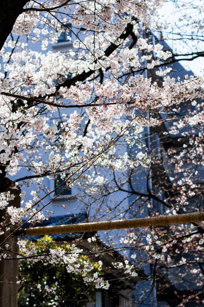Osaka in Spring - Hanami Season in Osaka / A Quick Travel Guide to Osaka, Japan by iHeartAlice.com – Travel, Lifestyle, Style & Foodblog by Alice M. Huynh