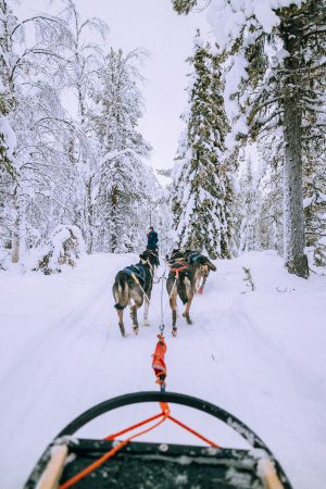 Husky Tours / Lappi Travel Vlog & Quick Guide To Lappland, Finland by iHeartAlice.com - Travel, Lifestyle, Food & Fashionblog by Alice M. Huynh