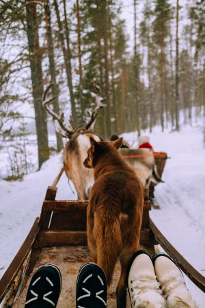 Reindeer ride w/ Levin Sammun-tupa Lappi / Quick Guide To Lappland, Finland by iHeartAlice.com - Travel, Lifestyle, Food & Fashionblog by Alice M. Huynh