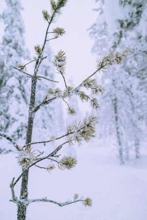 Lappi Travel Vlog & Quick Guide To Lappland, Finland by iHeartAlice.com - Travel, Lifestyle, Food & Fashionblog by Alice M. Huynh