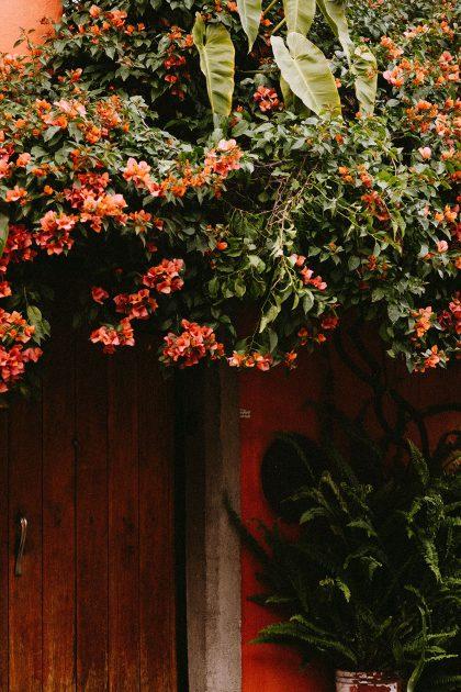 A Quick Guide To Mexico-City / CDMX Travel Guide by Alice M. Huynh - iHeartAlice.com Travel, Fashion & Lifestyleblog / Mexico Travel Diary